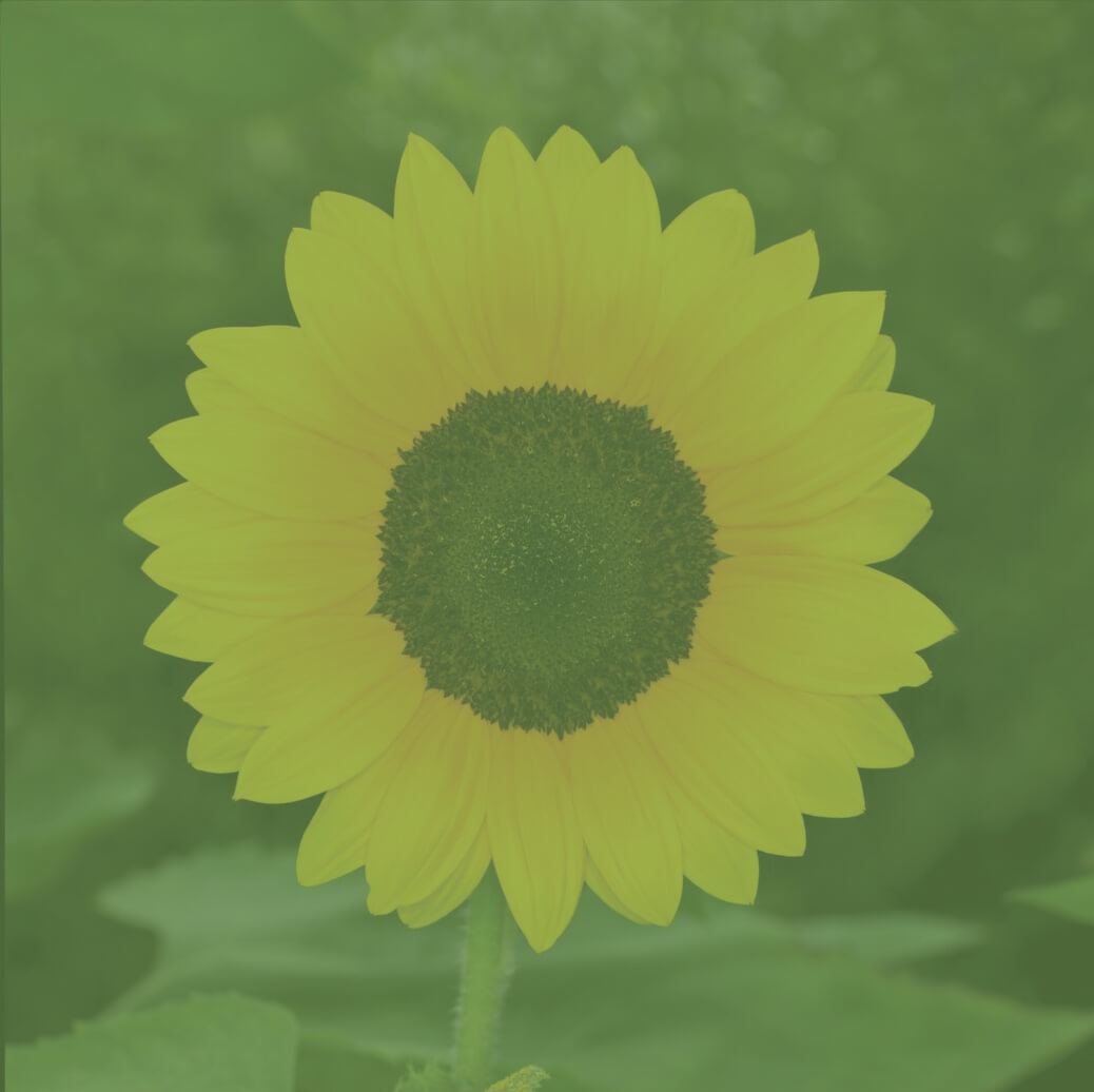 It's Time to Change Sunflower opening (Alex Pledger - Counselling and coaching in Birmingham)
